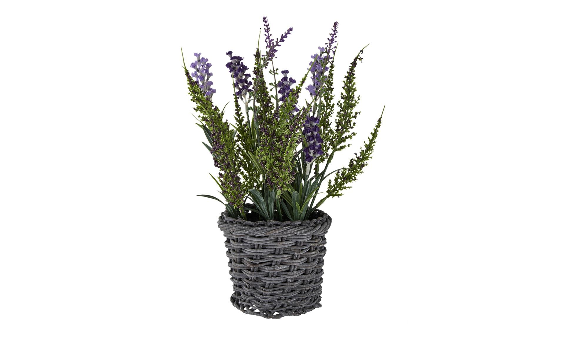 Lavendel im Korb - lila/violett - Rattan, Kunststoff - 30 cm - Dekoration > Kunstblumen - Möbel Kraft