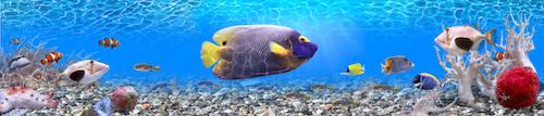 Aquarium auf Raten kaufen